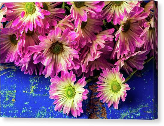 Pom-pom Canvas Print - Pink Poms On Blue Table by Garry Gay