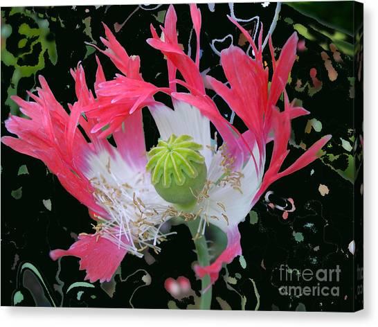 Pink Poppy Canvas Print by Addie Hocynec