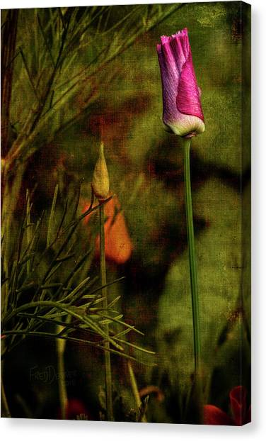 Canvas Print featuring the photograph Pink Poppy by Fred Denner
