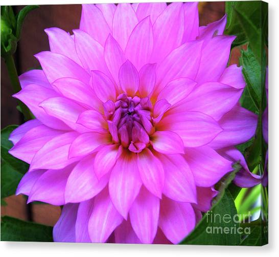 Canvas Print featuring the photograph Pink Purple Dahlia Flower by Kristen Fox