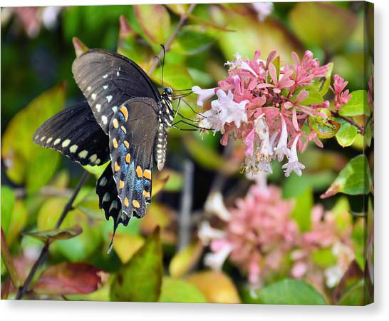 Pink Queen Canvas Print by JAMART Photography