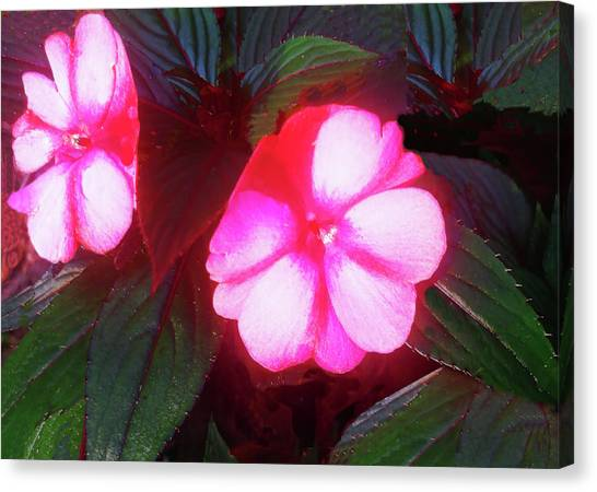 Pink Red Glow Canvas Print