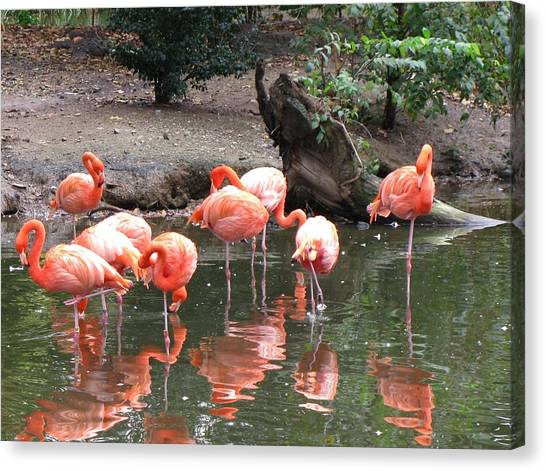 Pink Reflections Canvas Print by Gloria Byler