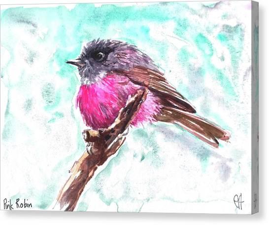 Pink Robin  Canvas Print