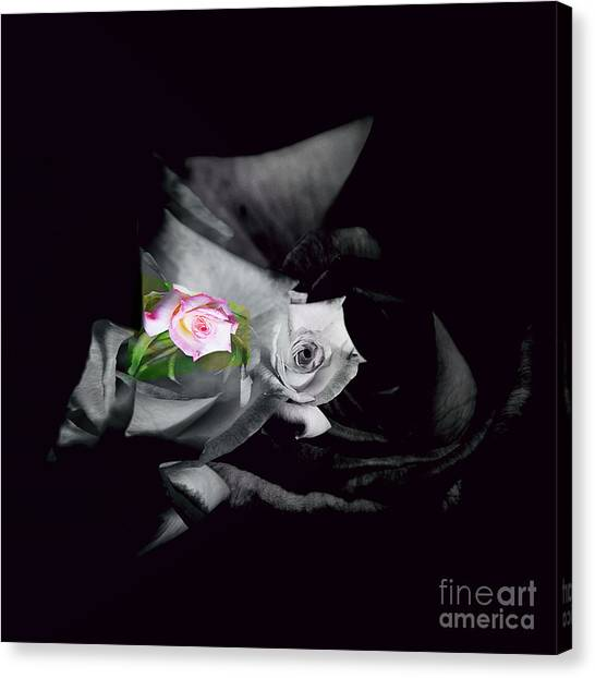 Pink Rose 2 Shades Of Grey Canvas Print