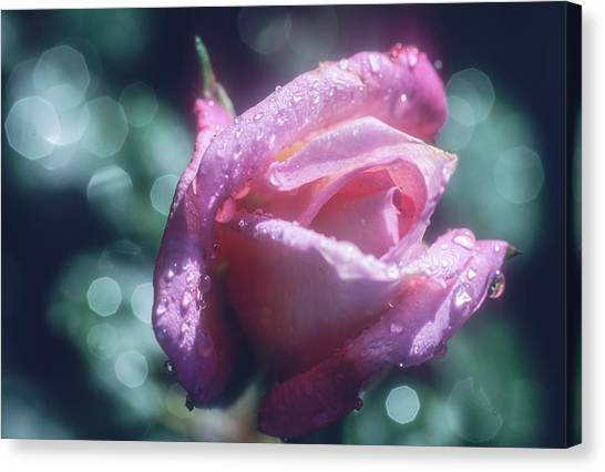 Canvas Print featuring the photograph Pink Rose After Rain by John Brink