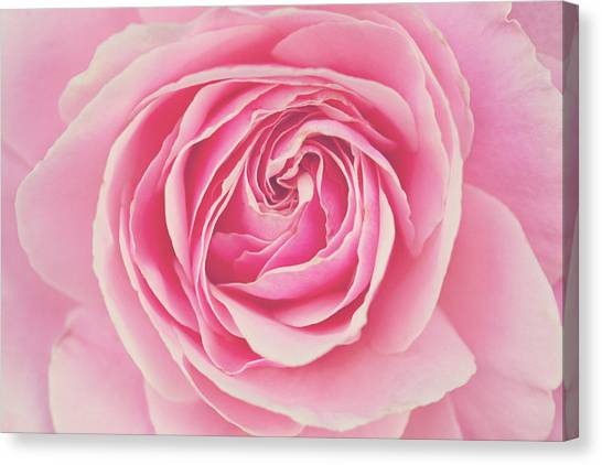 Pink Rose Petals Canvas Print