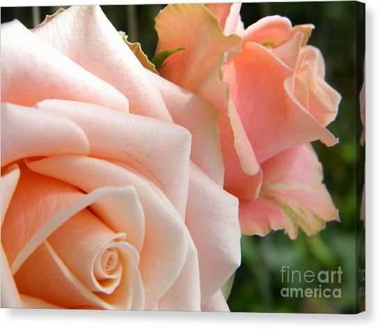 Pink Roses Canvas Print by Amanda Heavlow