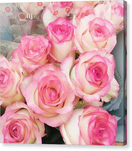 Roses Canvas Print - Pink Roses! #fpoefebruary #fpoe #pink by Ivy Ho