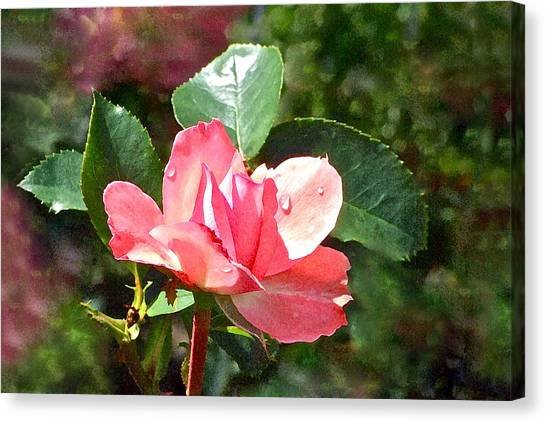 Pink Roses In The Rain 2 Canvas Print