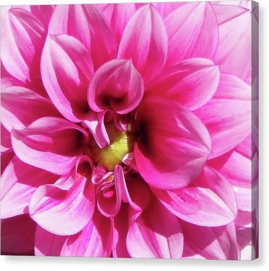 Pink Summer Flower Macro Canvas Print