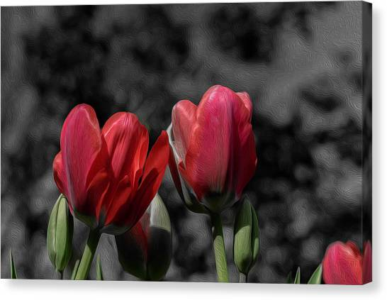 Pink Tulip Pop Canvas Print