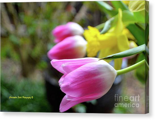 Pink Tulips Row Canvas Print