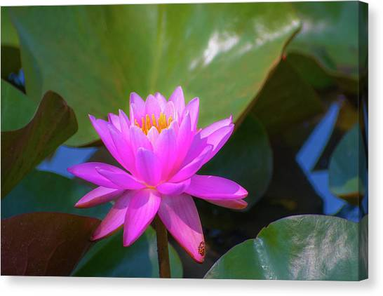 Pink Water Lilly And Ladybugs Canvas Print