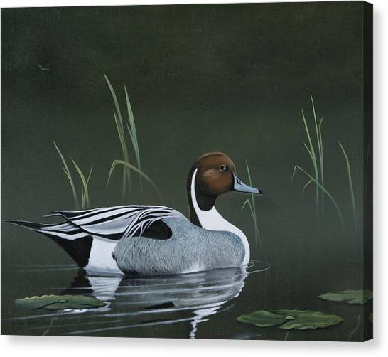 Pintail Portrait Canvas Print by Don Griffiths