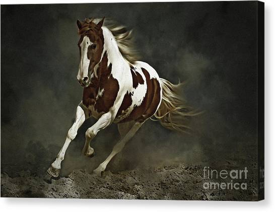 Ranch Dressing Canvas Print - Pinto Horse In Motion by Dimitar Hristov