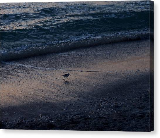 Piper At Dusk Canvas Print
