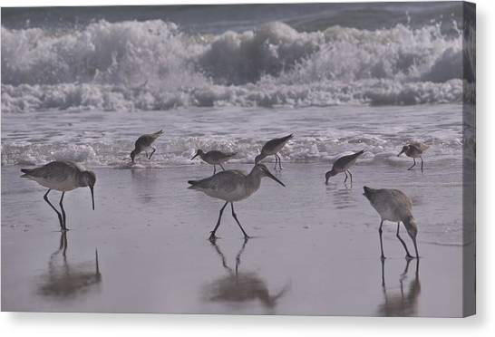 Sandpipers Canvas Print - Piper Paradise by Betsy Knapp