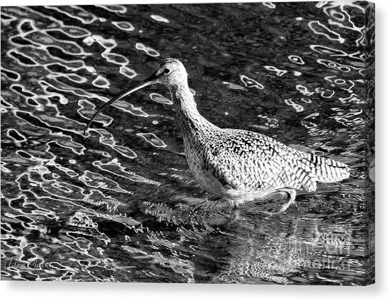 Piper Profile, Black And White Canvas Print