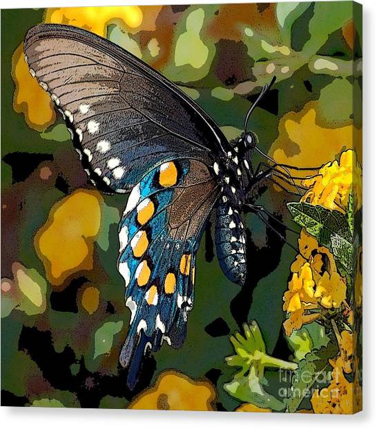 Pipevine Swallowtail Butterfly Canvas Print by David Smith