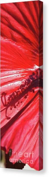 Canvas Print - Pistil Shadow by Megan Cohen