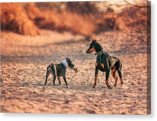 Pitbull And Doberman Canvas Print