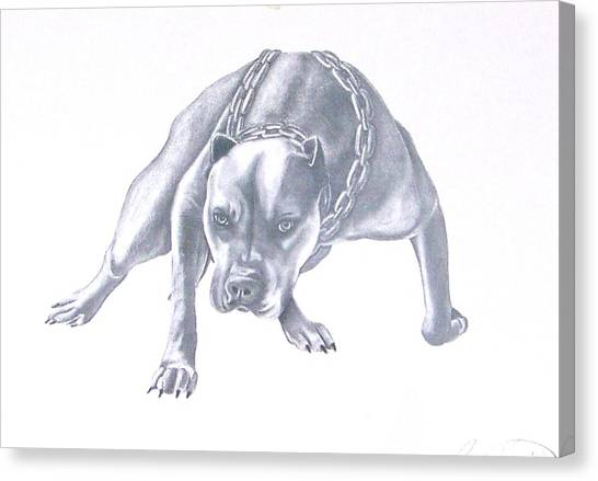 Pitt Bull With Chains Canvas Print by Rebecca Bellomo