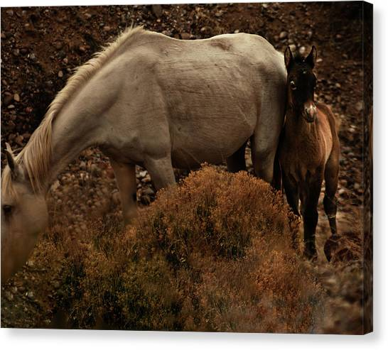 Canvas Print featuring the photograph Placitas 6 by Catherine Sobredo