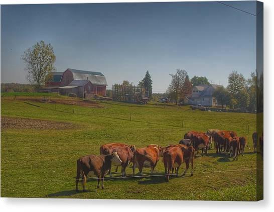 1014 - Plain Road Farm And Cows I Canvas Print