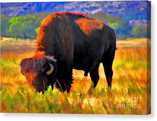 Plains Buffalo Canvas Print by JohnD Smith