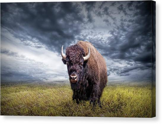 Plains Buffalo On The Prairie Canvas Print