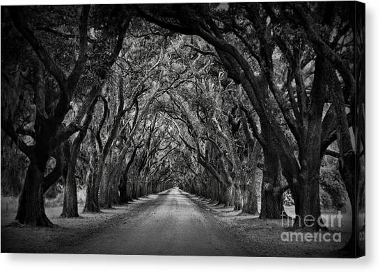 Mississippi River Canvas Print - Plantation Oak Alley by Perry Webster
