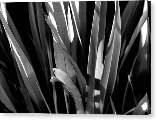 Planted Canvas Print by Jez C Self