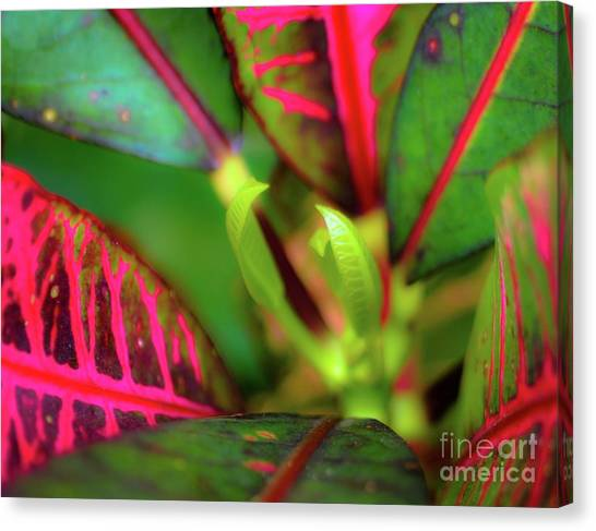 Canvas Print featuring the photograph Plants In Hawaii by D Davila