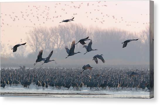 Platte River Morn Canvas Print