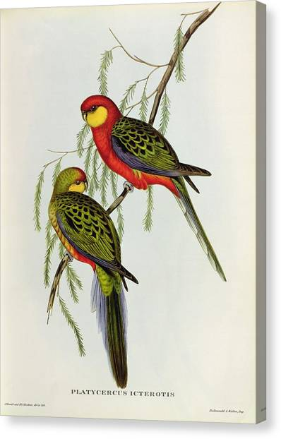 Parakeets Canvas Print - Platycercus Icterotis by John Gould