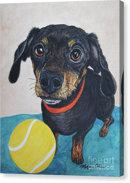 Canvas Print - Playful Dachshund by Megan Cohen
