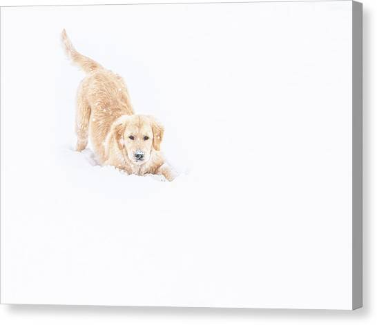 Playful Puppy In So Much Snow Canvas Print