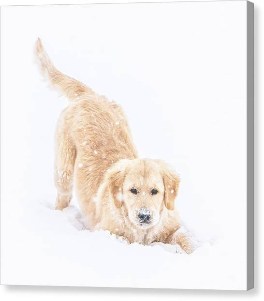 Playful Puppy Canvas Print