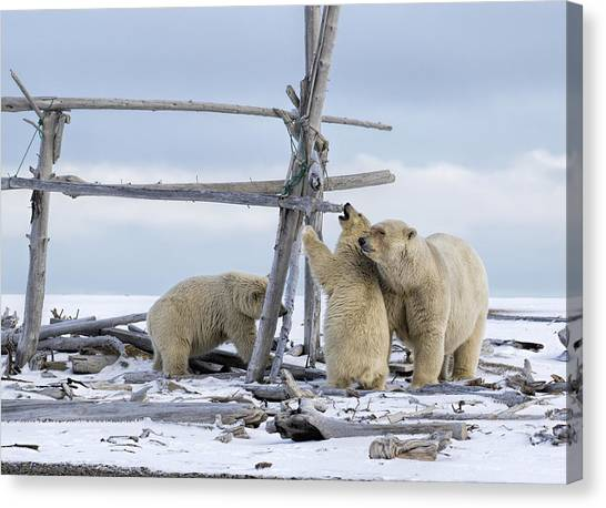 Playtime In The Arctic Canvas Print