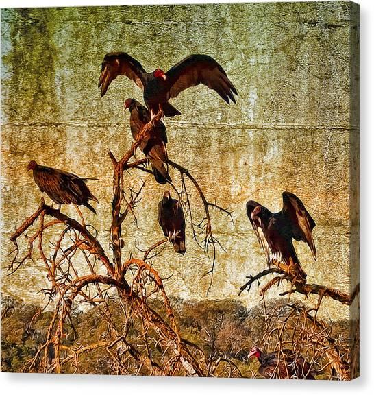 Pleasanton Vultures Canvas Print