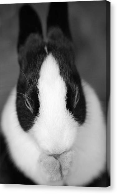 Please Be Carrots Canvas Print by Fraser Davidson