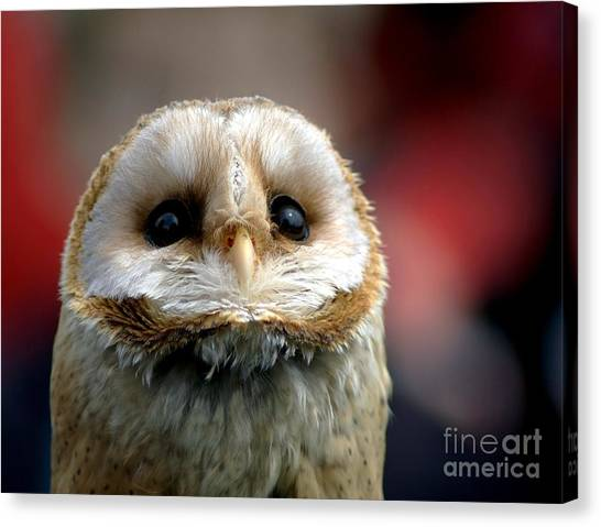 Owls Canvas Print - Please  by Jacky Gerritsen