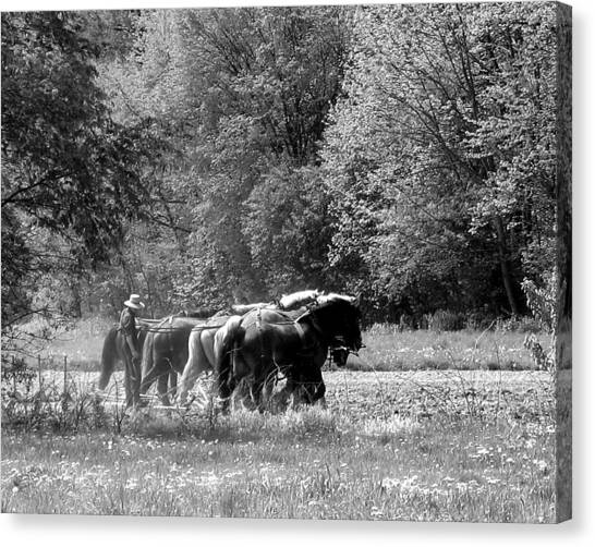 Plowing The Old Way 1  Canvas Print