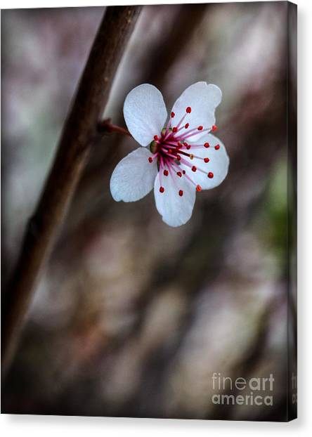 Plum Flower Canvas Print