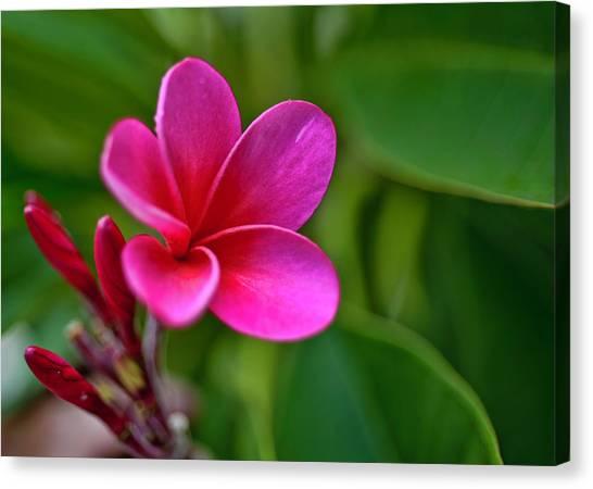 Plumeria - Royal Hawaiian Canvas Print