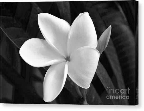 Plumeria In Monochrome Canvas Print