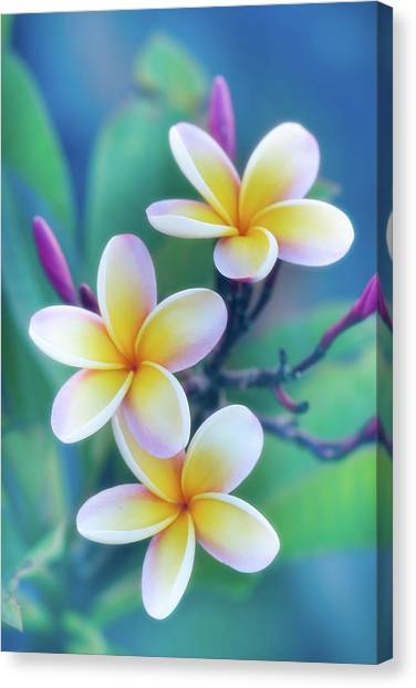 Hawaii Canvas Print - Plumerias In Pastel by Jade Moon