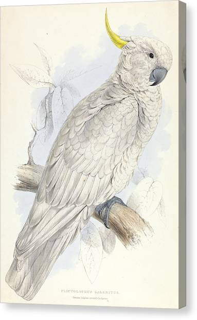 Cockatoos Canvas Print - Plyctolophus Galeritus. Greater Sulphur-crested Cockatoo. by Edward Lear