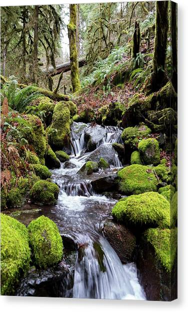 Pnw Forest Canvas Print